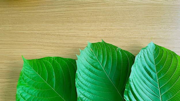 Крупным планом лист кратома зеленый лист фон