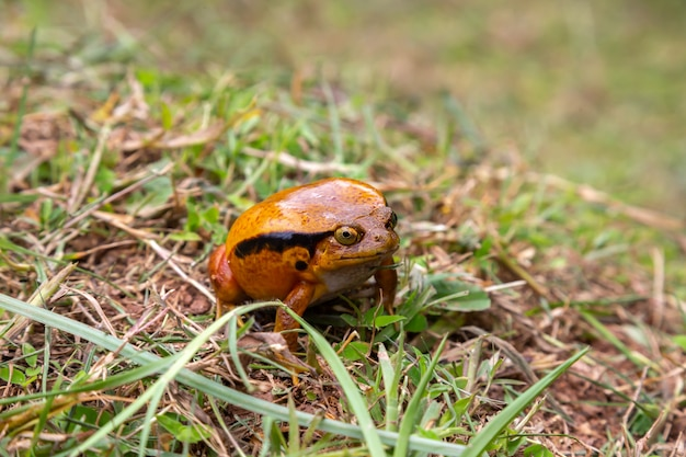 Close up on large frog sitting in the grass