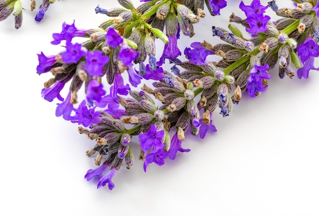 Close-up of lavender flowers on white background
