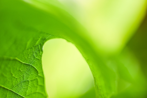 Close up leaf beautiful on blur soft focus tree  for leaves nature green wallpaper and backdrop