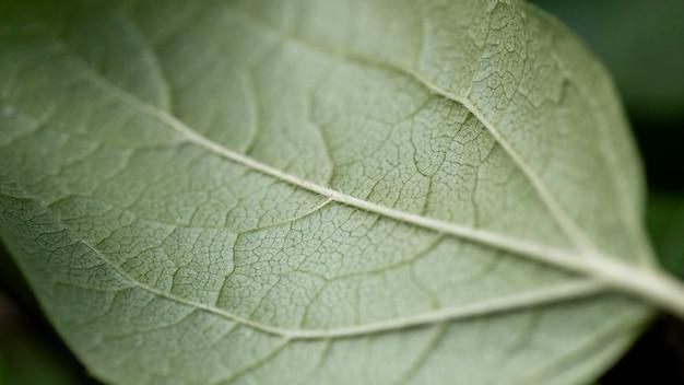 근접 잎 상세 구조