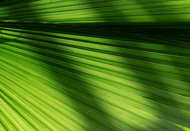 Close-up leaf of tropical tree
