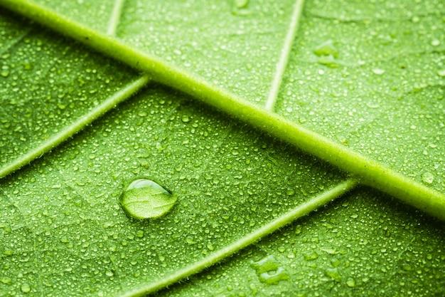 水滴と葉を閉じる