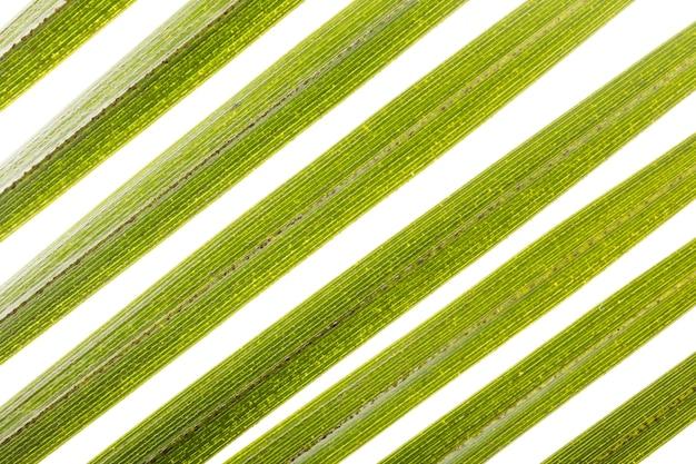 Close-up di foglie