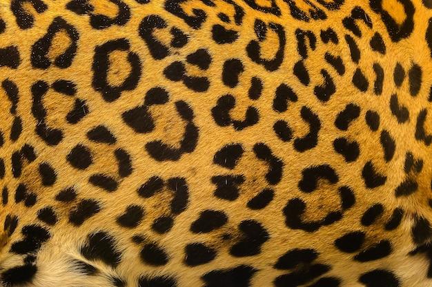 ヒョウのスポットパターンのテクスチャの背景を閉じます