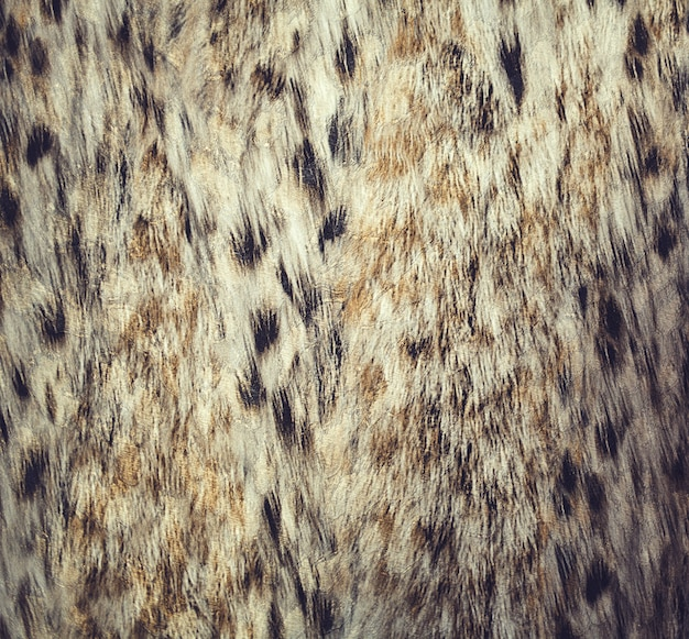 Close up leopard spot pattern