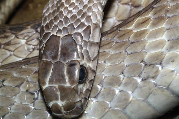 明るい茶色の色のヘビを閉じます