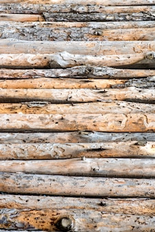 Close up of lined up pine tree trunks