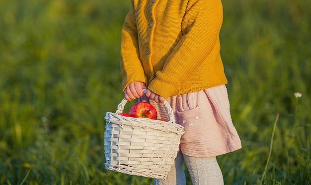 閉じる。小さなかわいい女の子が秋の庭を歩き、赤いリンゴのバスケットを持っています。明るい秋の服を着た幸せな女の子の肖像画。