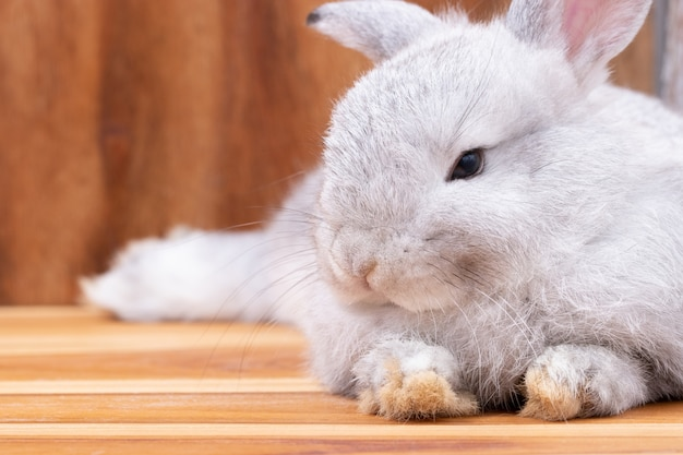 Close up, little gray rabbit laying on wooden table background