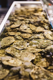 Close up live and fresh oysters in shell under the water.