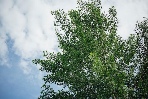 木のてっぺんのクローズアップの低角度のビュー