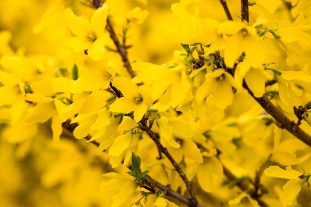 매크로 아름 다운 밝은 노란색 꽃을 닫습니다.