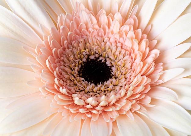 Primo piano del fiore sbocciato macro
