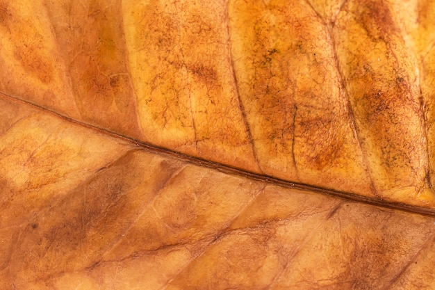 マクロの葉のテクスチャを閉じる