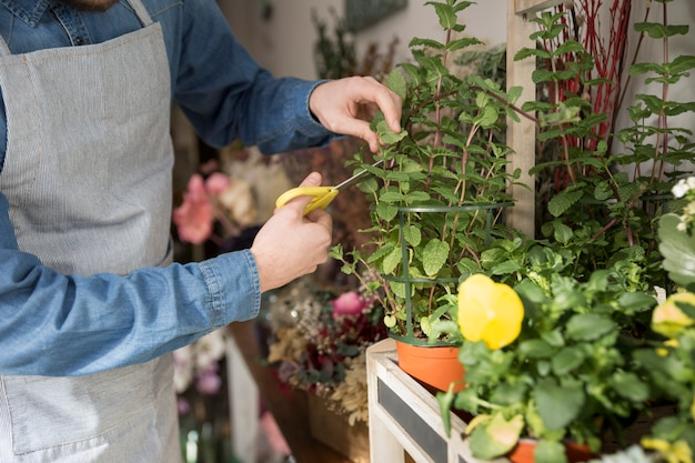 Close-up of male florist cutting the leaves of plant with scissor