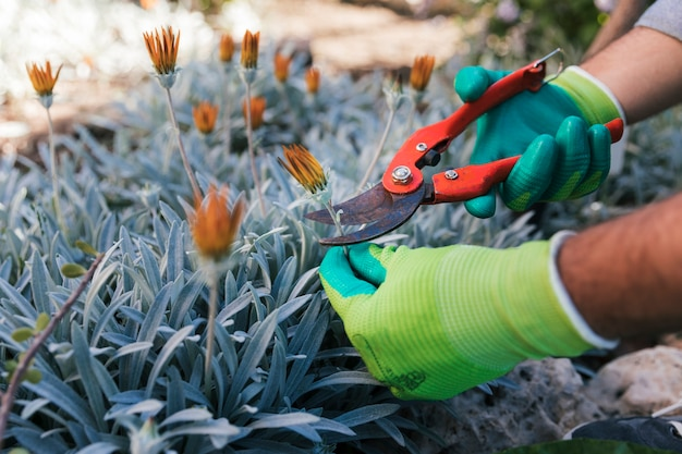 Close-up of a male gardener's hand pruning the flowers