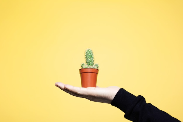 Close-up of male hand holding small green cactus in brown pot