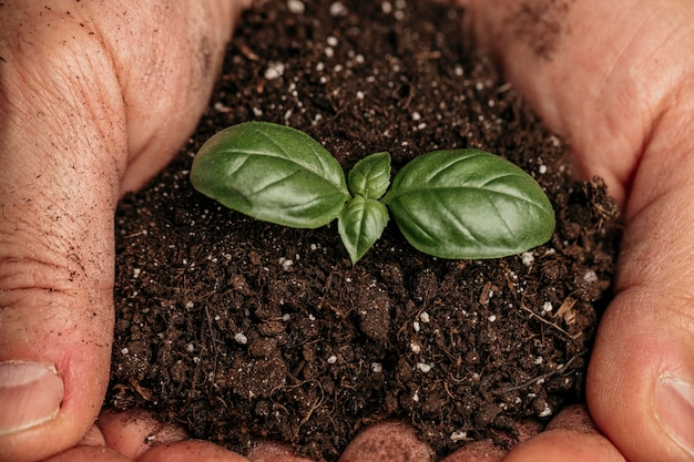 Close-up of male hands holding soil and growing plant