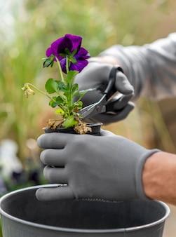 Chiuda sulle piante che crescono dell'uomo