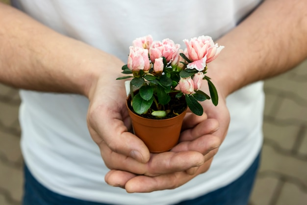 Close-up man holding small house plant