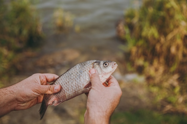 Close up a man holds in his hands a fish with an open mouth on a blurred pastel lake background. lifestyle, recreation, fisherman leisure concept. copy space for advertisement.