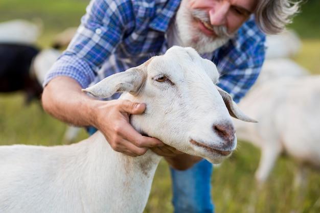 Крупным планом человек играет с козой