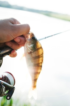 Close-up of man's hand holding caught fish and fishing rod over lake