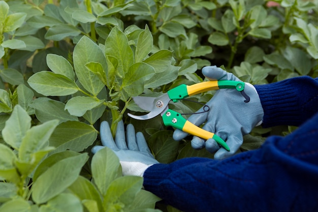Close-up man trimming plants in garden
