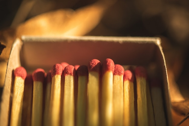 Close-up to the matches box in the forest