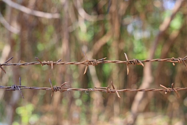Close-up of metal barbed wire on nature.