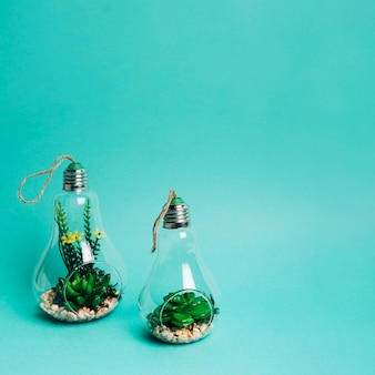 Close-up of a mini set of succulents arrangement in a light bulb