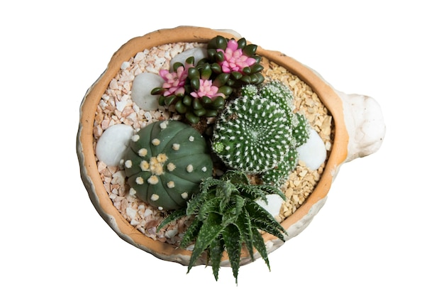 混合された小さなサボテン植物を鉢の頭上または孤立した上面図でクローズアップ