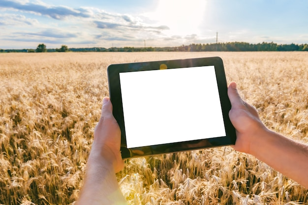 Close-up, mock-up tablet in the hands of a man. against the background of a field with ears of wheat in sunny weather.