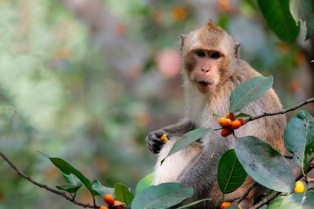 Крупным планом обезьяна ест еду на дереве