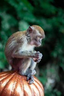 Крупным планом портрет обезьяны в пещерах бату, куала-лумпур, малайзия