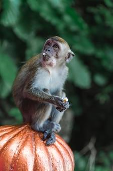 Close up monkey portrait at batu caves, kuala lumpur, malaysia Premium Photo
