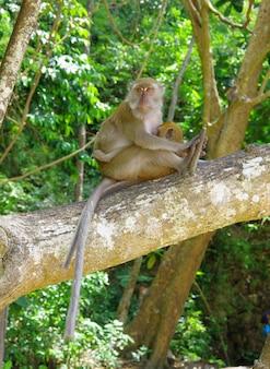 Close up on monkey sitting on the tree