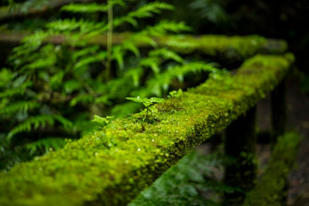 Close-up of moss on railing of a fence at costa rica rainforest