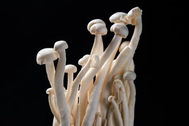 Close up mushroom on black background