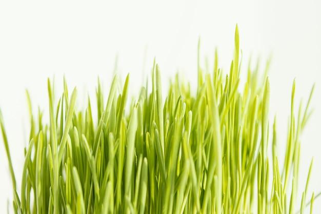 自然の草をクローズアップ
