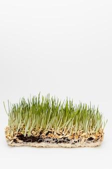 Primo piano di erba naturale