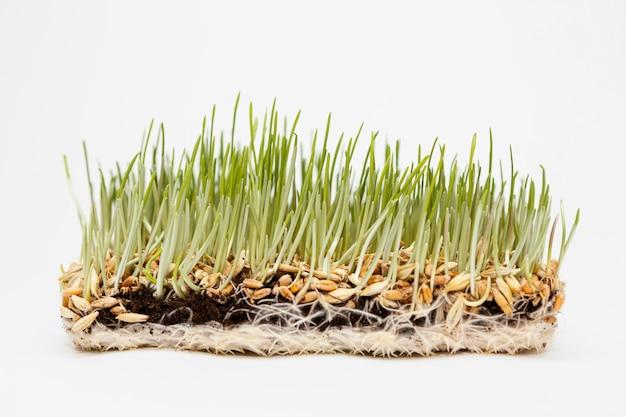 천연 잔디를 닫습니다