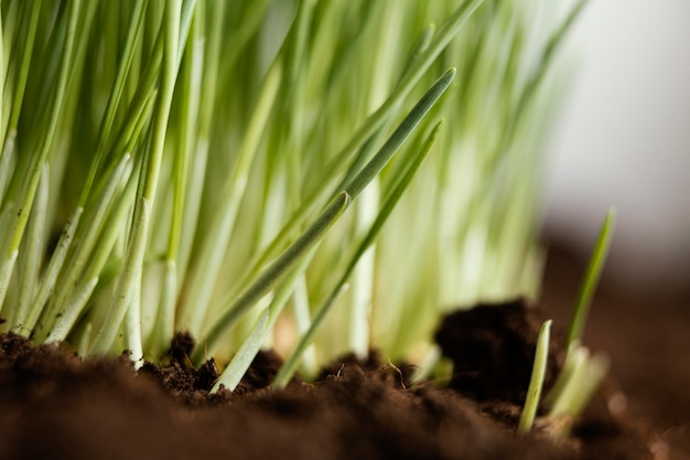 自然の土や草をクローズアップ