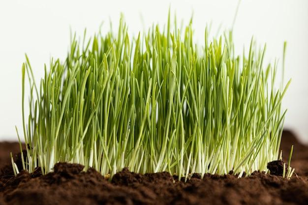 Close up natural soil and grass