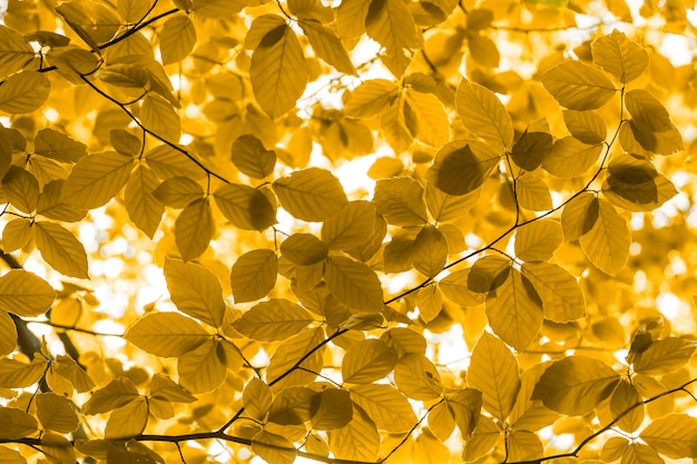 Close up of natural yellow leaves forest background