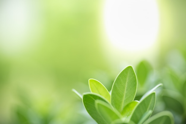 Close up of nature green leaf on blurred greenery under sunlight.