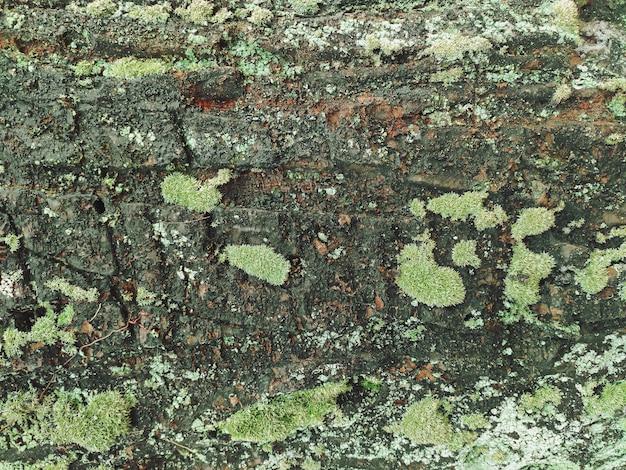 Close up природа старый ствол дерева