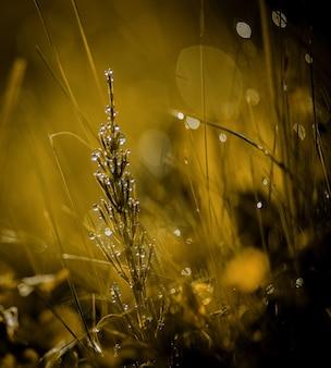 비 또는 이슬 물 방울 숲 야생 식물과 자연 여름 배경을 닫습니다