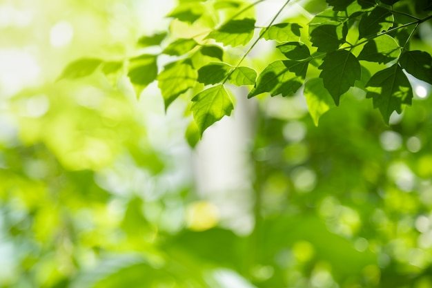 Close up of nature view green leaf on blurred greenery background under sunlight with bokeh and copy space background natural plants landscape,